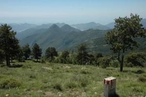 Foresta di Gouta