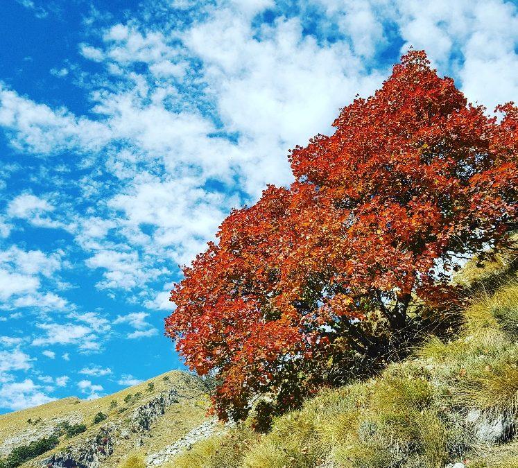 15 ottobre – Sapori d'autunno a Colle Melosa