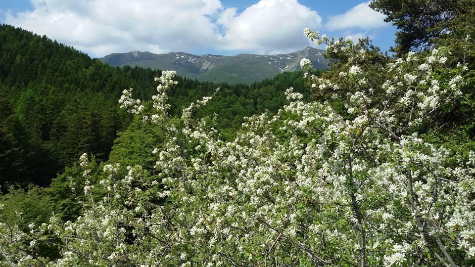 Festa di Primavera nelle Alpi Liguri – ultimo weekend 23-25 marzo