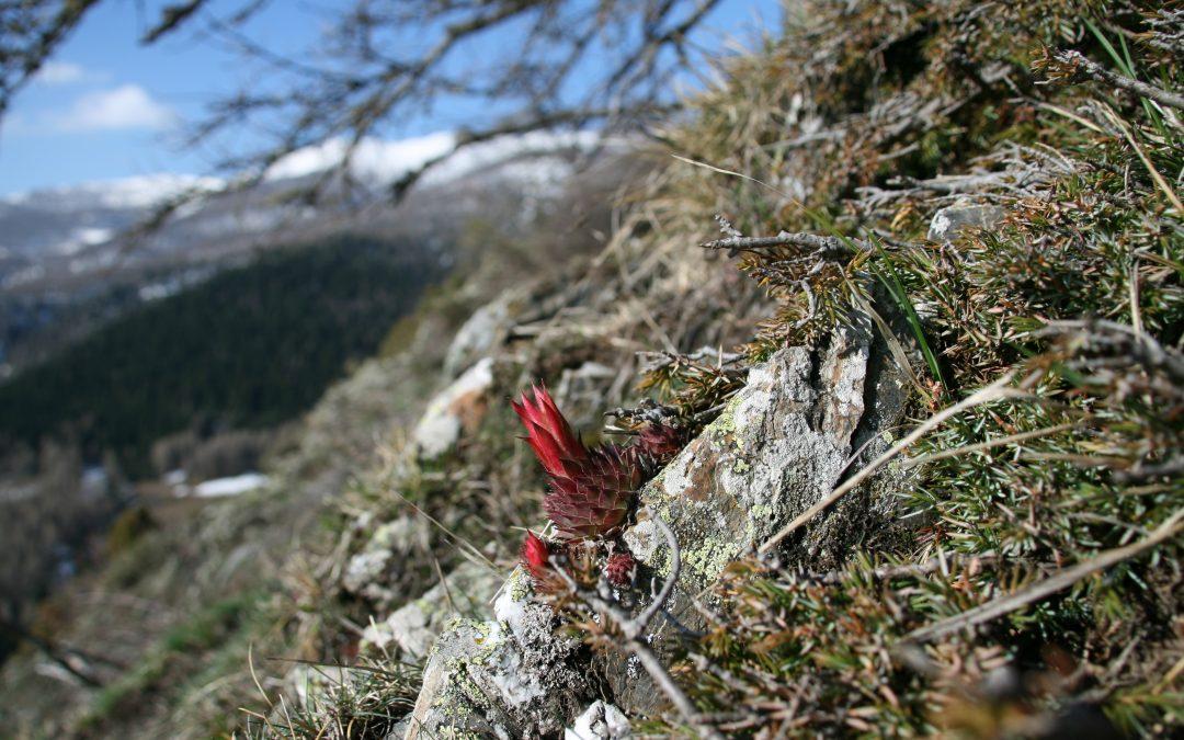 Festa di Primavera nelle Alpi Liguri – eventi 16-18 marzo