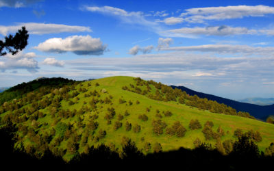 28 aprile – Le fioriture delle Alpi Liguri