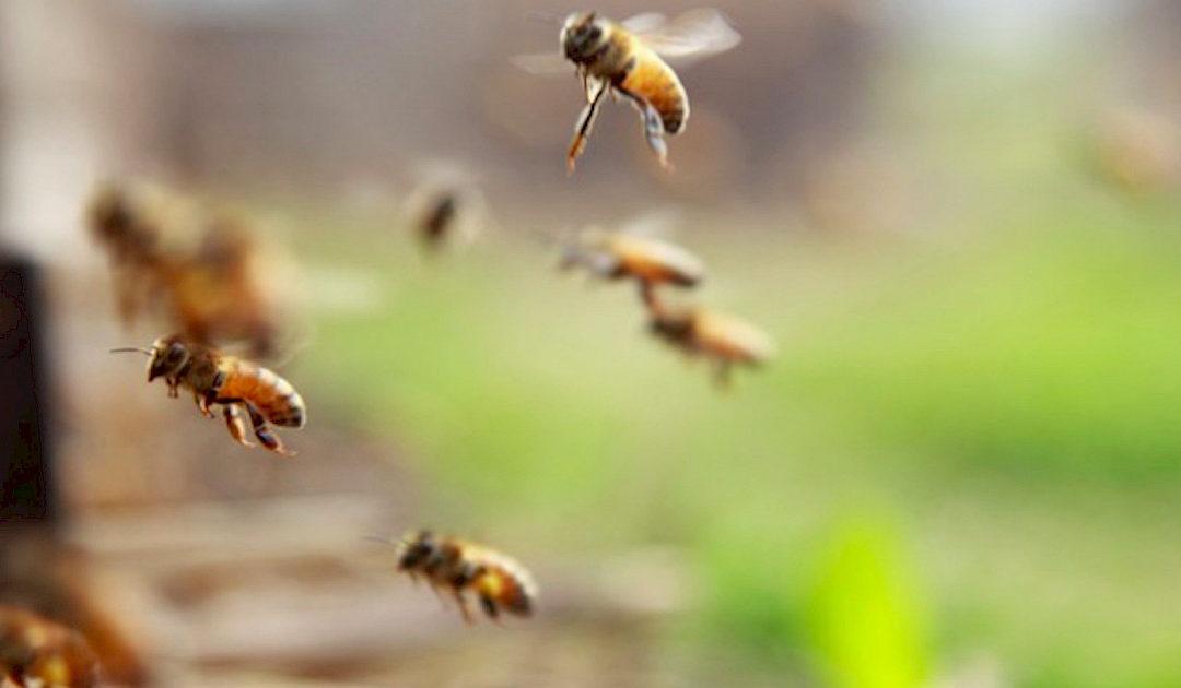 In evidenza – Bando per interventi in apicoltura