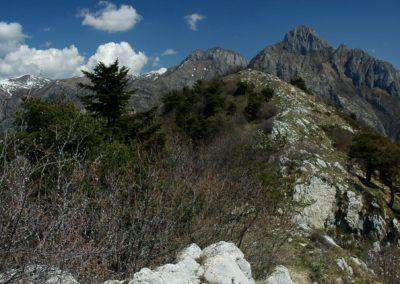 Zona Speciale di Conservazione Monte Toraggio-Monte Pietravecchia