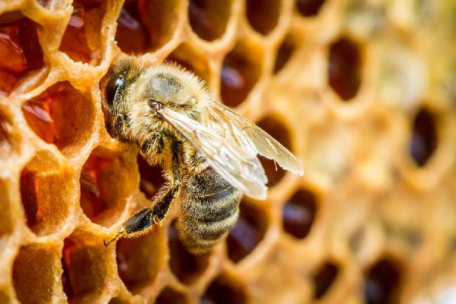 """Concorso """"Mieli dei Parchi della Liguria"""" 2020 – Invito agli apicoltori"""
