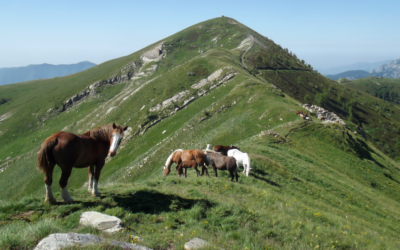 """27 settembre Giornata Sentieri Liguri 2020 – Escursione """"Wolftrek – Sulle tracce del lupo. L'anello del Monte Fronté"""""""