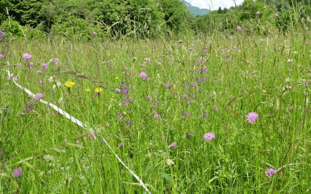 5 maggio – Webinar sulla raccolta del fiorume per il miglioramento dei pascoli