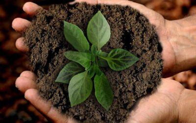 9 giugno – Webinar gratuito di pianificazione economica per aziende agricole